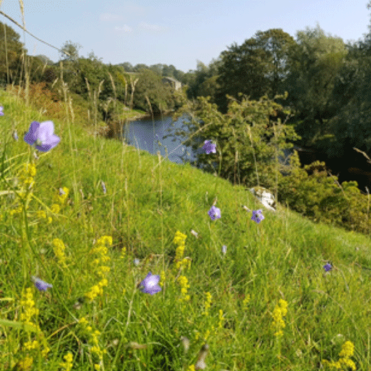 Wildflowers Gloucestershire