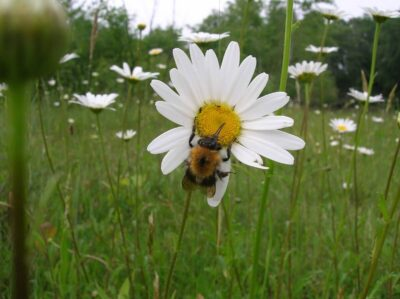 Insects and local provenance