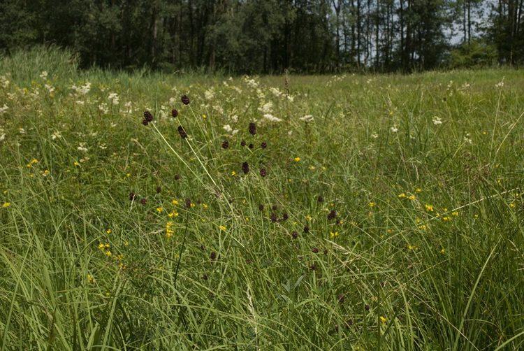 Wildflower Seeds Gloucestershire