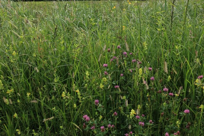 Wildflower Seeds Herefordshire